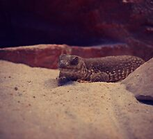 Reptile at Red Rock Canyon by WestCoastEden