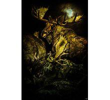 Night Fight Photographic Print