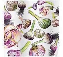 A Grouping of Garlic Poster