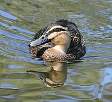 Love A Duck by dilouise