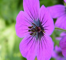 Pretty and Purple by ElsT