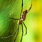 Orb Spider by Maybrick