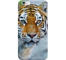 Attentive tiger iPhone Case/Skin