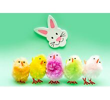 Easter Chicks and Rabbit Photographic Print
