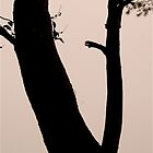 October Tree Silhouette by Mike  Waldron