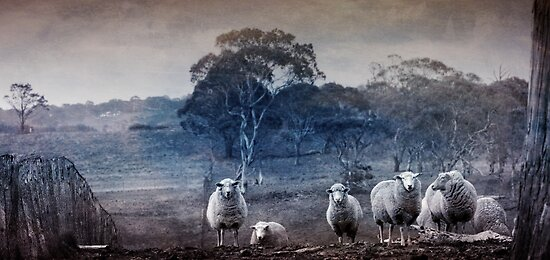 Night time sheep counting people by Clare Colins