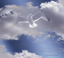Seagull with Matthew 6:26-27 in White Letters by Corri Gryting Gutzman