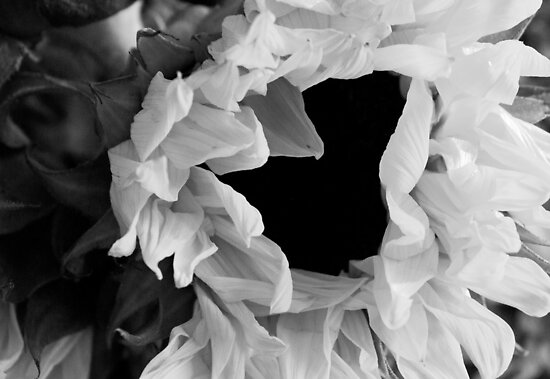Sunflower 1 Black and White by marybedy