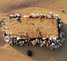 A New Home for Shellfish. by Trish Meyer
