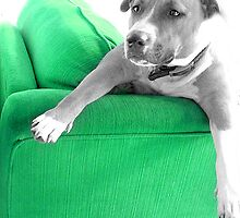 My Green Couch by love2Bloved