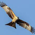 Red Kite by Mark Hughes
