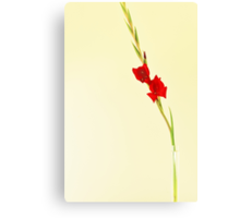 Red Gladiolus Spike Canvas Print