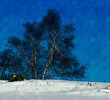 Blue Birch by Kelly  McAleer