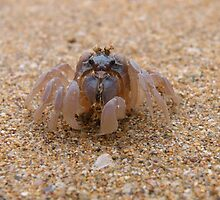 Soldier Crab at Denhams Beach by Trish Meyer