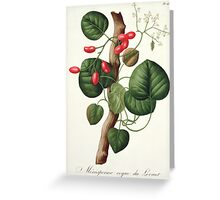 Menispermum from 'Phytographie Medicale' Greeting Card