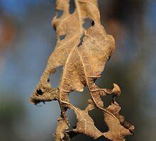 Leaf Holes by JuniorMiss