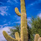 Cactus In The Moon by George Lenz