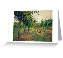 Vineyard Colours Greeting Card