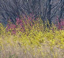 Phoenix Spring by kibishipaul