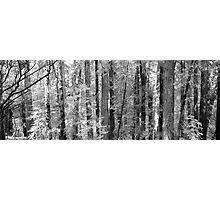 Muir Woods - San Francisco Photographic Print