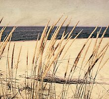Dune Grass by Michelle Calkins
