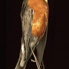 Robin and Egg by merrywrath