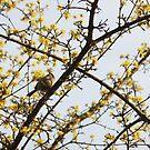 Little Bird by flightlessXbird