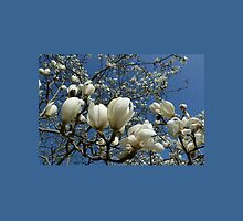 White Magnolia Flowers by Lawrence Bojkovic