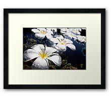White Lily (lilies) Flowers Above Water Framed Print