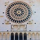 Great Rose Window by Francis Drake