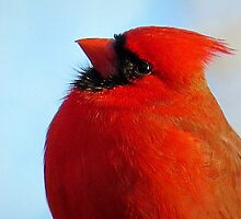 Red Cardinal Profile Portrait by Jean Gregory  Evans