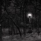 Strange Night Copse by Greg Stedman