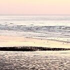 Starlings on Beach by Steve