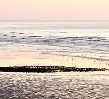 Starlings on Beach by Steve