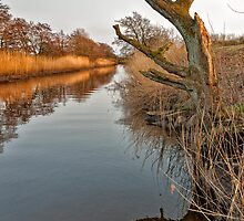 Tree by the river by Ovation66