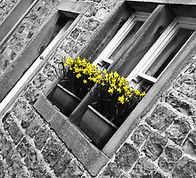 Spring Window Box by Sue Knowles