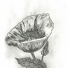 Poppies by SharonAHenson