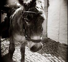 { Eeyore } by Lucia Fischer