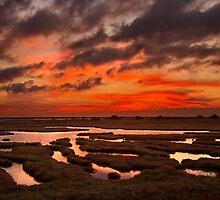 Marshlands of Evros by Hercules Milas