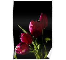tulip red green black Poster