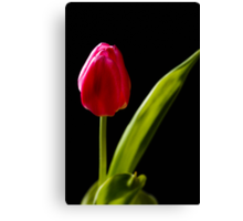 tulip red green black Canvas Print
