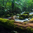 Lamington NP, Qld by McguiganVisuals
