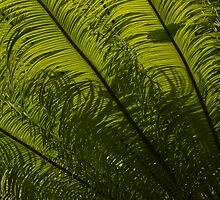 Tropical Green Curves and Diagonals by Georgia Mizuleva