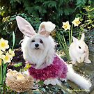 Ready for Easter by Morag Bates