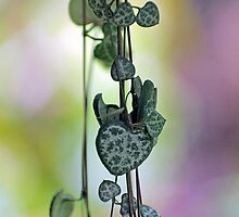 Entwined ~ Chain of Hearts by Kerryn Madsen-Pietsch