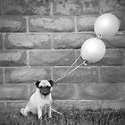 Pug Balloon by Stephanie Sherman