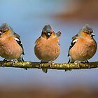 The Three Amigos by Margaret S Sweeny