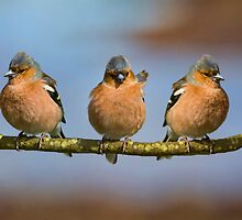 The Three Amigos by M.S. Photography & Art