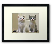 One of them is camera shy...guess which one?  Framed Print