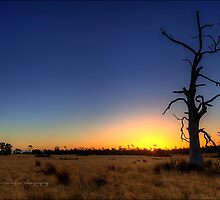 """""""Sunset Tree"""" by Husky"""